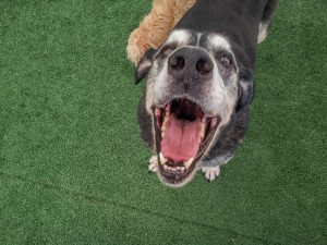 Places for Pets Dog Cat Lancaster County PA Kennel