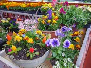 Lancaster County Greenhouses, featuring beautiful flowers, gardens, & lawns