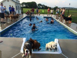 Oasis pool canine country club