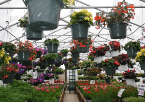 Hilltop Acres Farm Market flower garden center