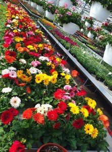 Flower-Display-Wenger's-Greenhouse
