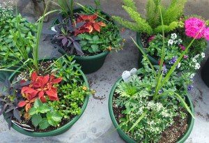 Flower-Pots-Wenger's-Greenouse