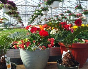 Planters-Wengers-Greenhouse