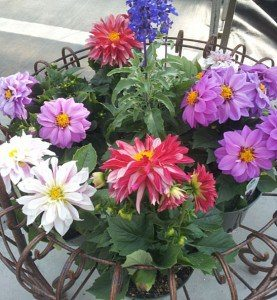 Potted-Flowers-Wenger's-Greenhouse