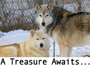 The Wolf Sanctuary of PA Lititz Lancaster County PA