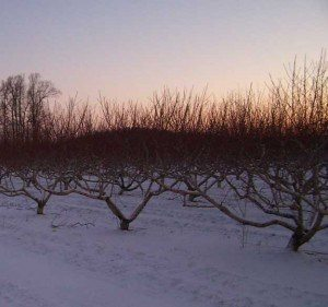 Brecknock-Orchard-Winter