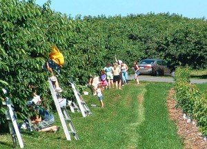 Cherry Hill Orchard Lancaster County PA Locally Owned Farm to Table Seasonal Picking