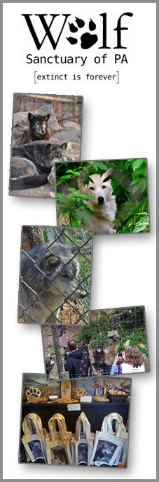 Wolf-Sanctuary of PA