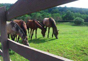 Hickory-Run-Horses