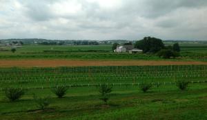 kissel hill orchard