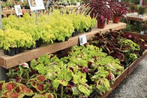 Ken's Gardens Intercourse Smoketown Lancaster County PA Locally Owned Family Operated Miniature Gardens Pots Supplies Fresh Herbs Greens Pottery