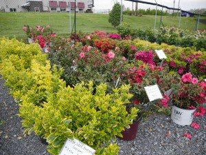 Winning Touch Nursery Stevens Lancaster County PA