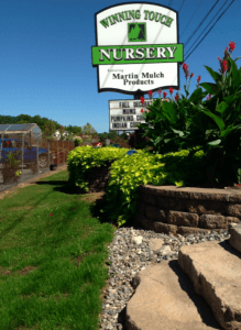 Winning Touch Nursery lawn garden 4