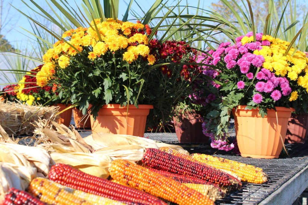 Franklin H. Kreider Lancaster County PA Frysville Farms Locally Owned Family Operated Home Lawn Garden Lancaster County Pennsylvania Reallancastercounty Pointsettias Bedding Plants Wreaths Fall Garden Mums Foliage Flowering Hanging Baskets Perennials Fall Garden Planters