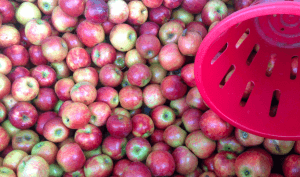 Springville Foods apples
