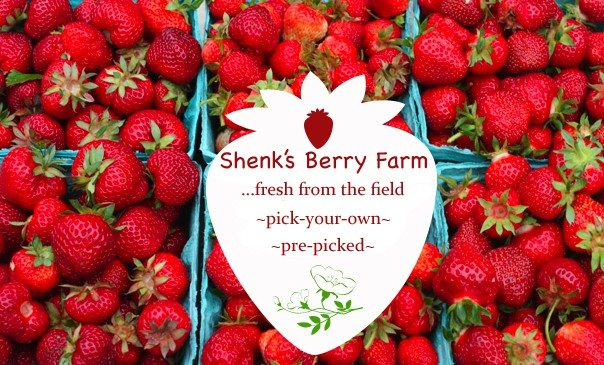 Shenk's-Berry-Logo