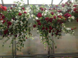 Zimmerman's Greenhouse 9