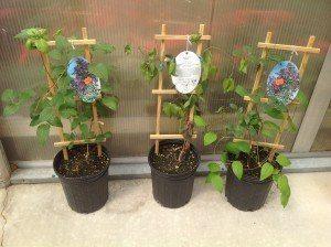 Zimmerman's Greenhouse 7