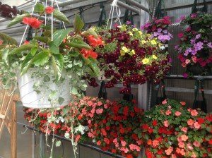 Zimmerman's Greenhouse 12