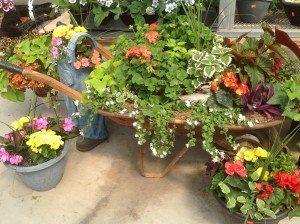 Zimmerman's Greenhouse