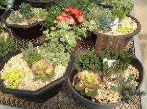 Zimmerman's Greenhouse 15
