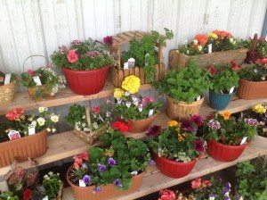 Dogwood Farm Market Reinholds Lancaster County PA Locally Owned Family Operated Farm Fresh Field-to-Table bedding plants hanging baskets fresh eggs homemade jams & jellies canned goods baked goods candies