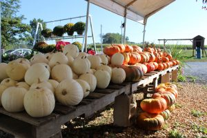 Dogwood Farm Market Reinholds Lancaster County PA Locally Owned Family Operated Farm Fresh Field-to-Table bedding plants hanging baskets fresh eggs homemade jams & jellies canned goods baked goods candies mums & fall varieties