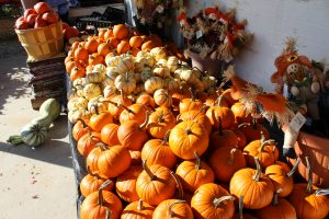 Dogwood Farm Market Reinholds Lancaster County PA Locally Owned Family Operated Farm Fresh Field-to-Table bedding plants hanging baskets fresh eggs homemade jams & jellies canned goods baked goods candies mums & fall varieties reallancastercounty