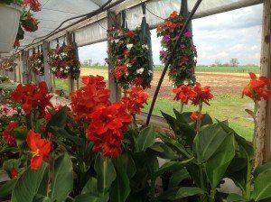 Leid's Greenhouses 12