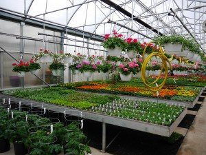 Zimmerman's Greenhouse Narvon Lancaster County PA