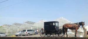 Directions Zimmmerman's Greenhouse