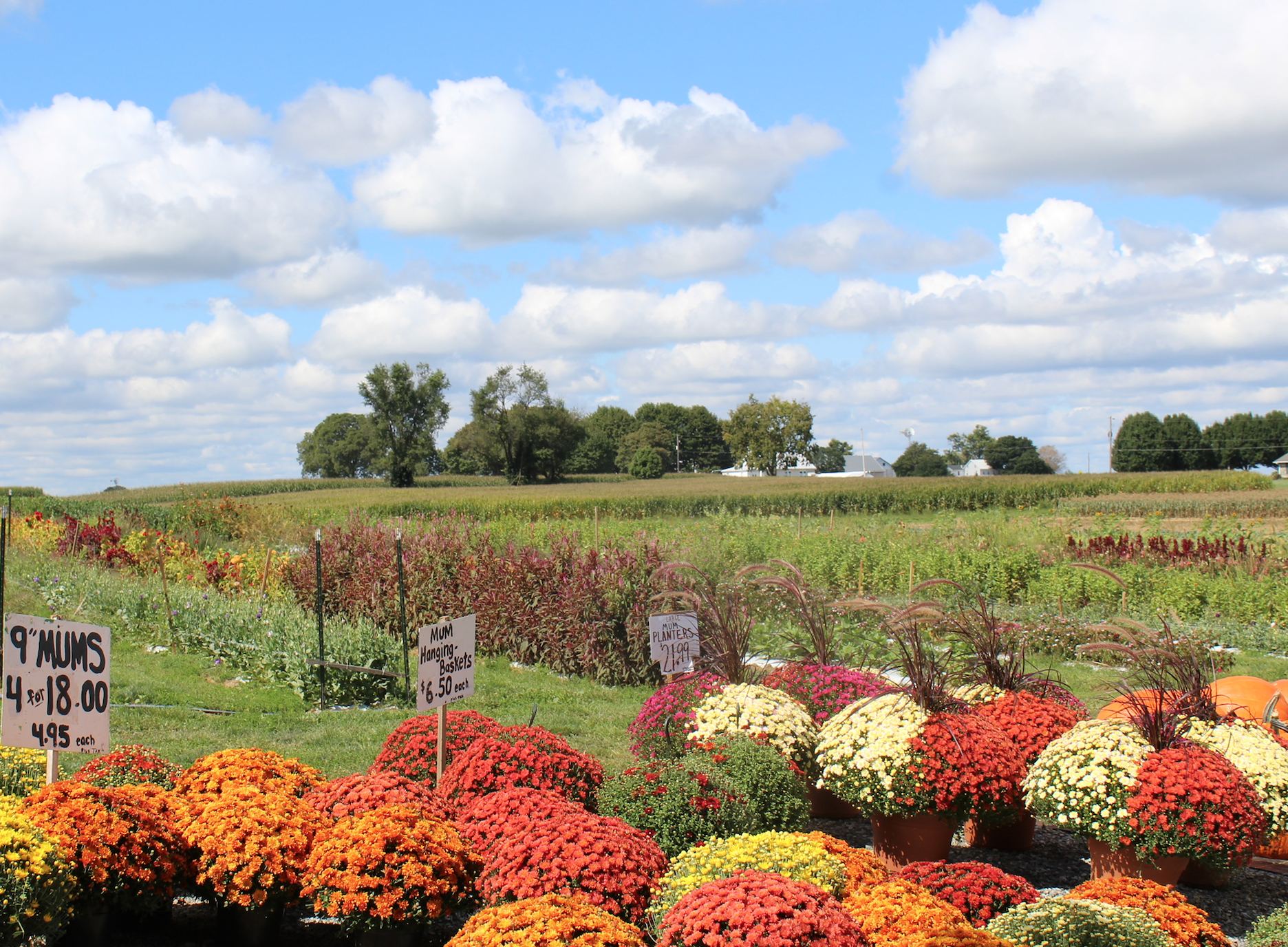 EverFresh Produce Farm Market New Holland Lancaster County PA seasonally grown produce field-to-table produce fresh baked goods preserves home canned options cut-your-own flowers arranged bouquet tomatoes canning Locally Owned Locally Operated