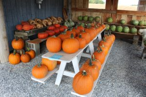 Funk's Riverview Greenhouse Washington Boro Lancaster County PA Locally Owned Family Operated Fall Harvest Gallery