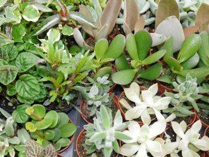 Shady Willow Greenhouse Lancaster County PA flowers gardens succulents plants 12