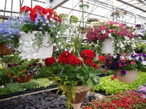 Cinder Road Greenhouse New Providence Lancaster County PA