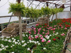 Funk's Riverview Greenhouse Washington Boro Lancaster County PA Locally Owned Family Operated