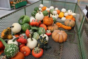 Country View Farm Market greenhouse flower garden center lancaster County PA Fall Harvest