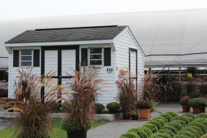 Mount Joy Greenhouse Flower Garden Center Fall Harvest Varieties Locally Owned Family Operated