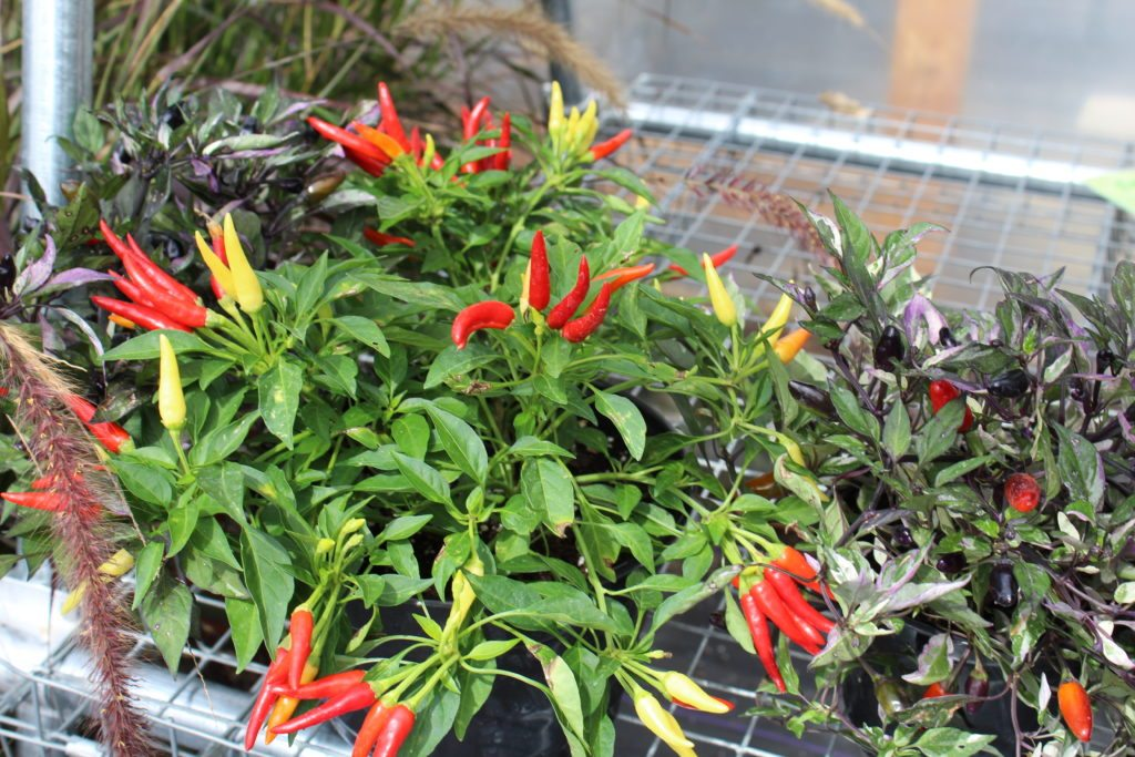 Creekside Greenhouse Marietta flowers gardens Locally owned family operated Lancaster County Pennsylvania PA flowers gardens plants succulents