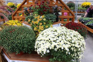 Town's Edge Greenhouse Reallancastercounty Lancaster County PA Pennsylvania Locally Owned Family Operated Miniature Gardens Garden Supply Flowering Shrubs Hanging Baskets Potted Arrangements