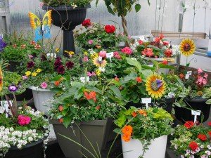 Creekside Greenhouse Marietta flowers gardens Locally owned family operated Lancaster County Pennsylvania PA flowers gardens plants