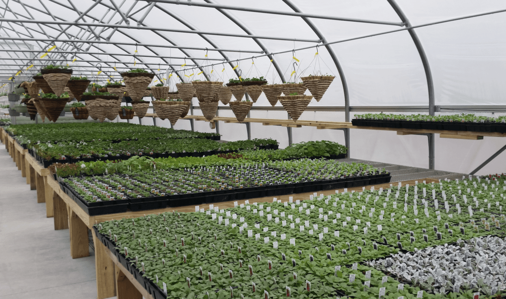 Country View Farm Market Greenhouse 25