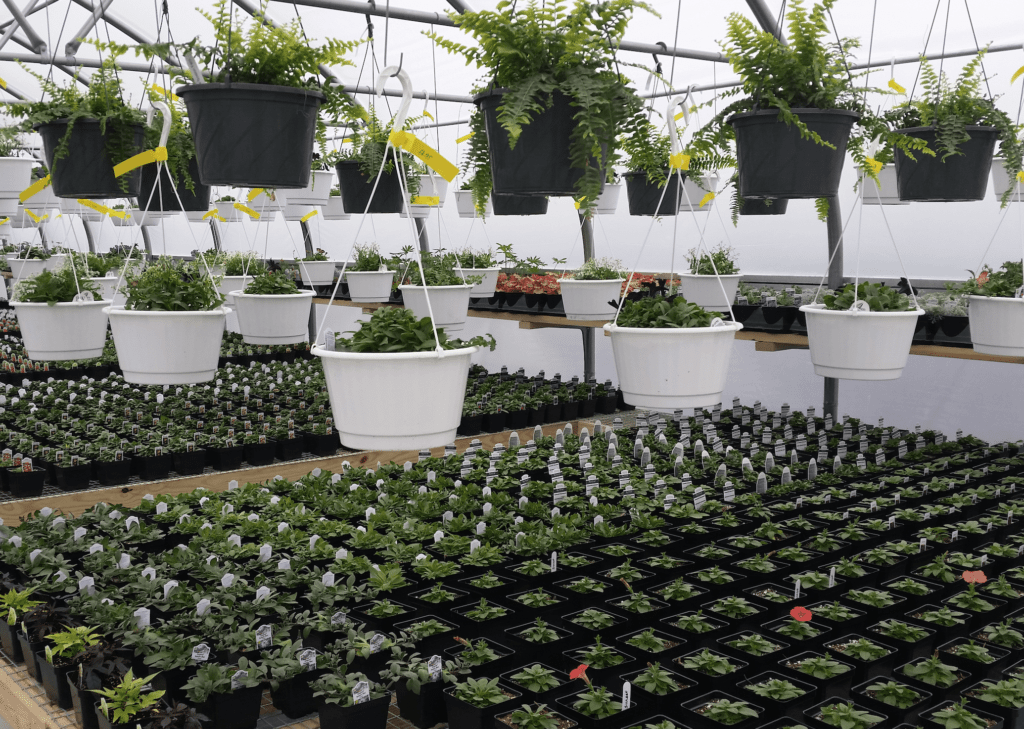 Country View Farm Market Greenhouse 17