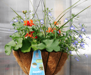 Mount Joy Greenhouse hanging baskets 3
