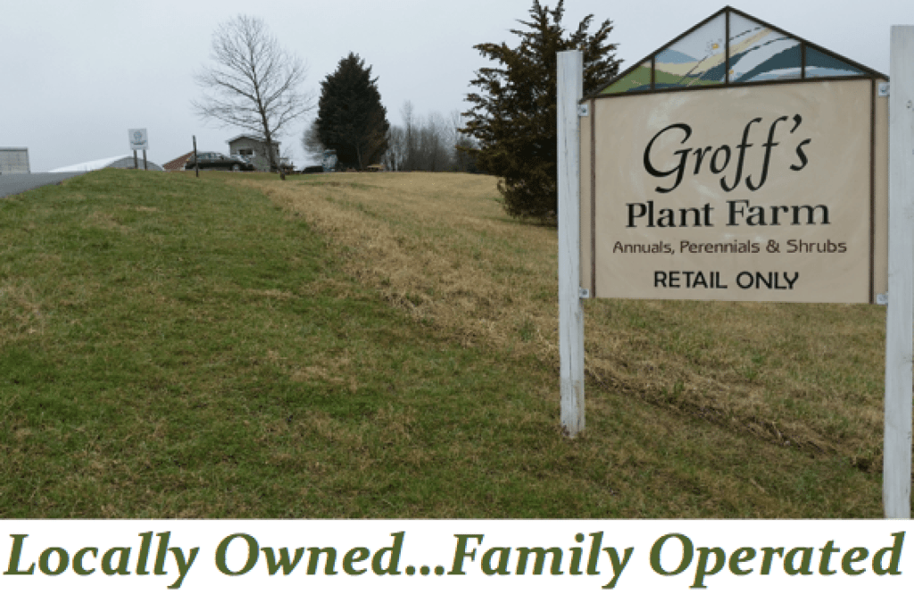 Groff's Plant Farm Lancaster County greenhouse flower garden center Kirkwood PA Reallancastercounty Pennsylvania Locally Owned Family Operated Annuals Perennials Shrubs