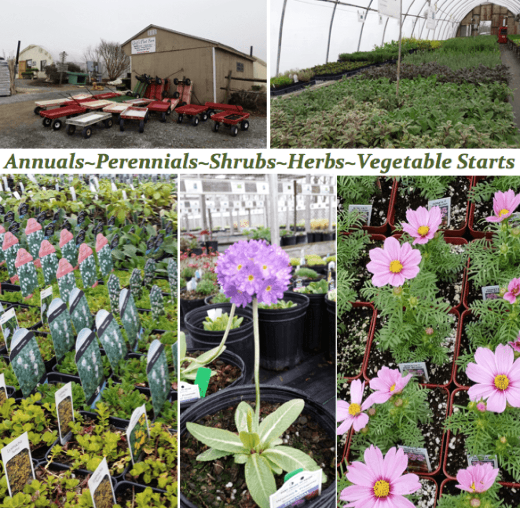 Groff's Plant Farm Lancaster County greenhouse flower garden center Kirkwood PA Reallancastercounty Pennsylvania Locally Owned Family Operated
