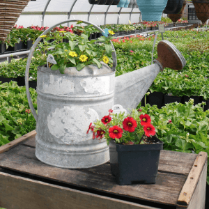 Hill Farm Greenhouse repurposed pots 2