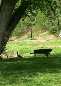 Pequea Creek Campground Pequea Lancaster County Pareal