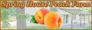 Spring House Peach Farm