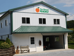Spring House Peach Farm Narvon PA Lancaster County Orchard